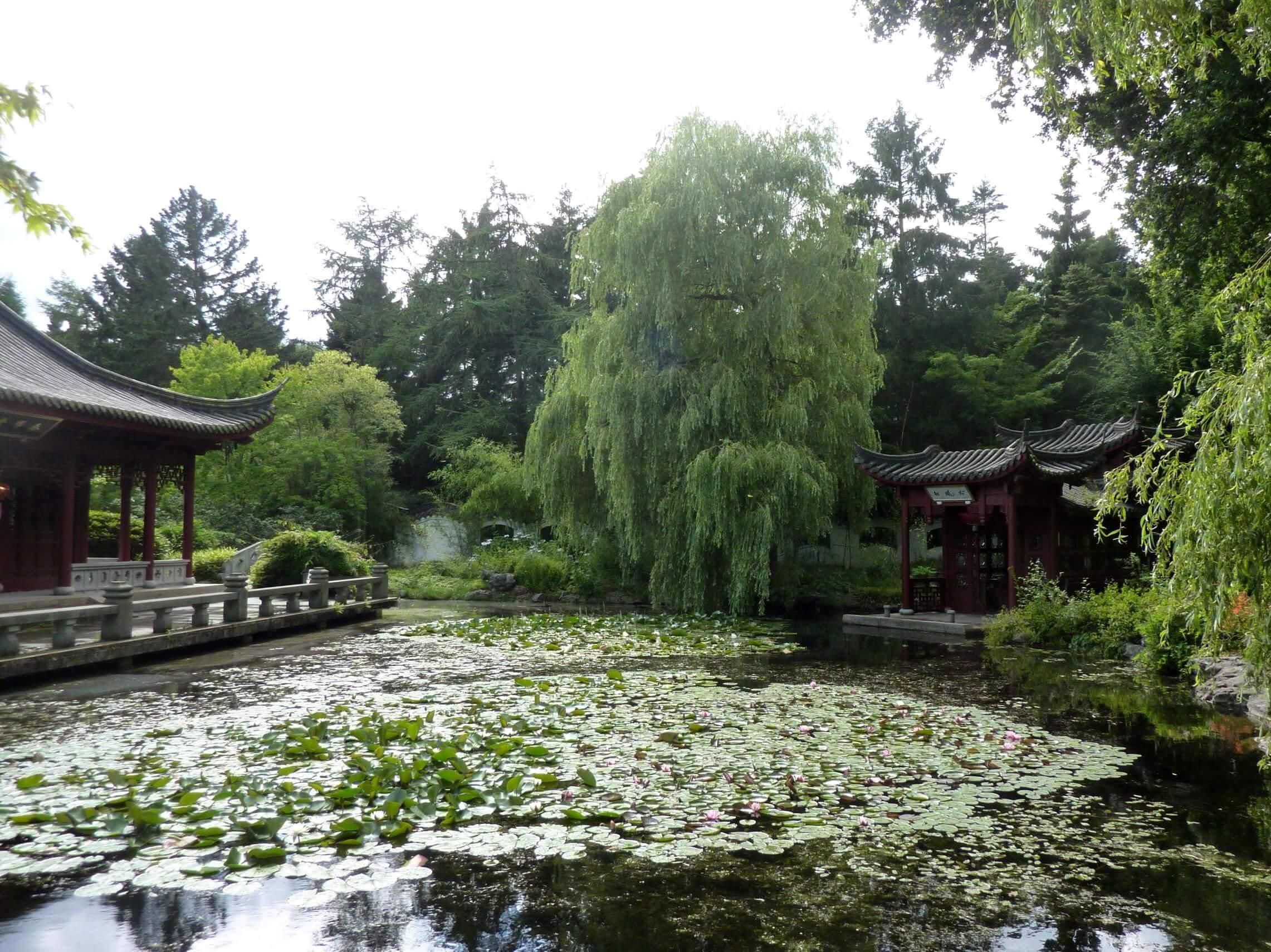 Vijver Chinese tuin
