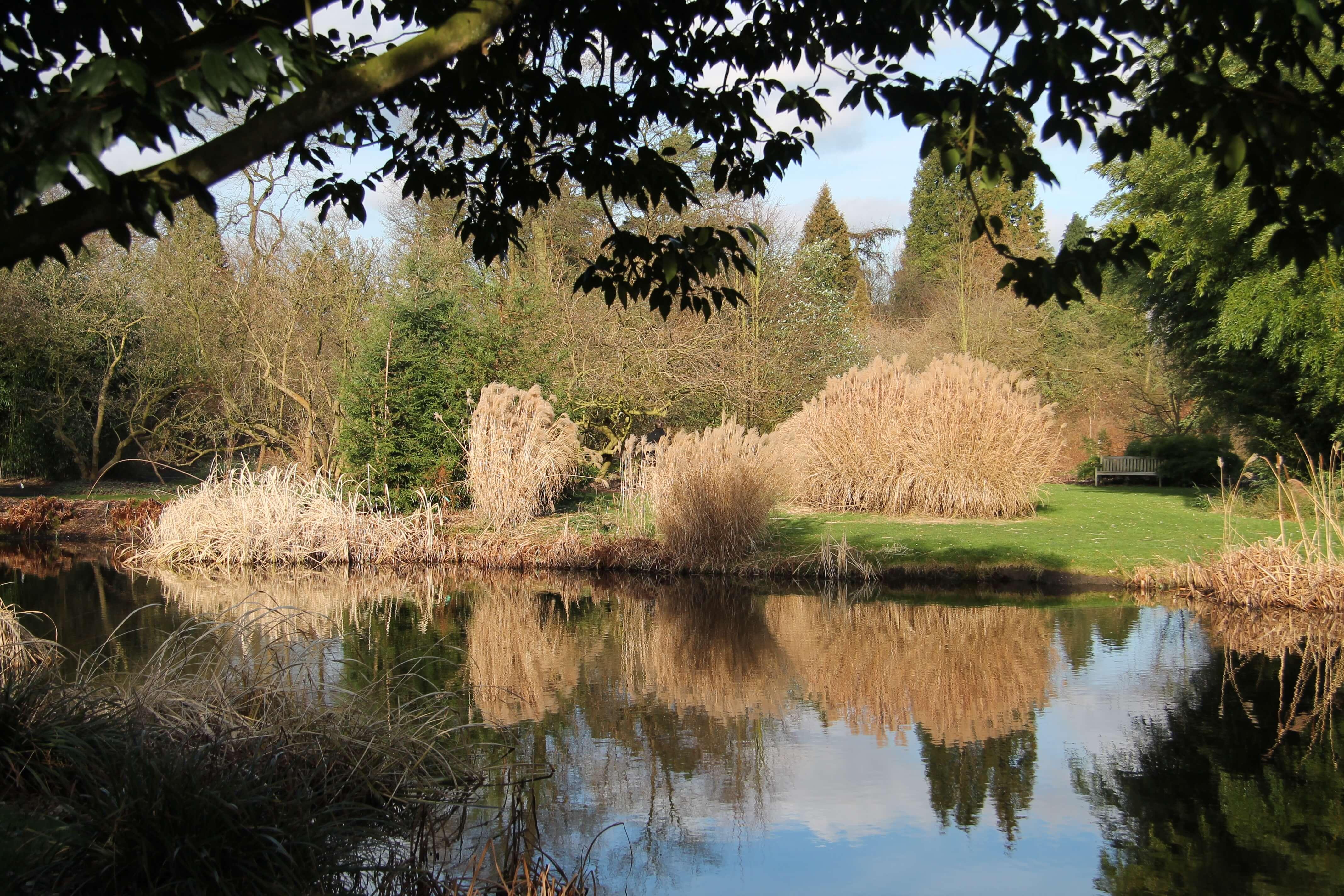 Arboretum Kalmthout , de grote vijver