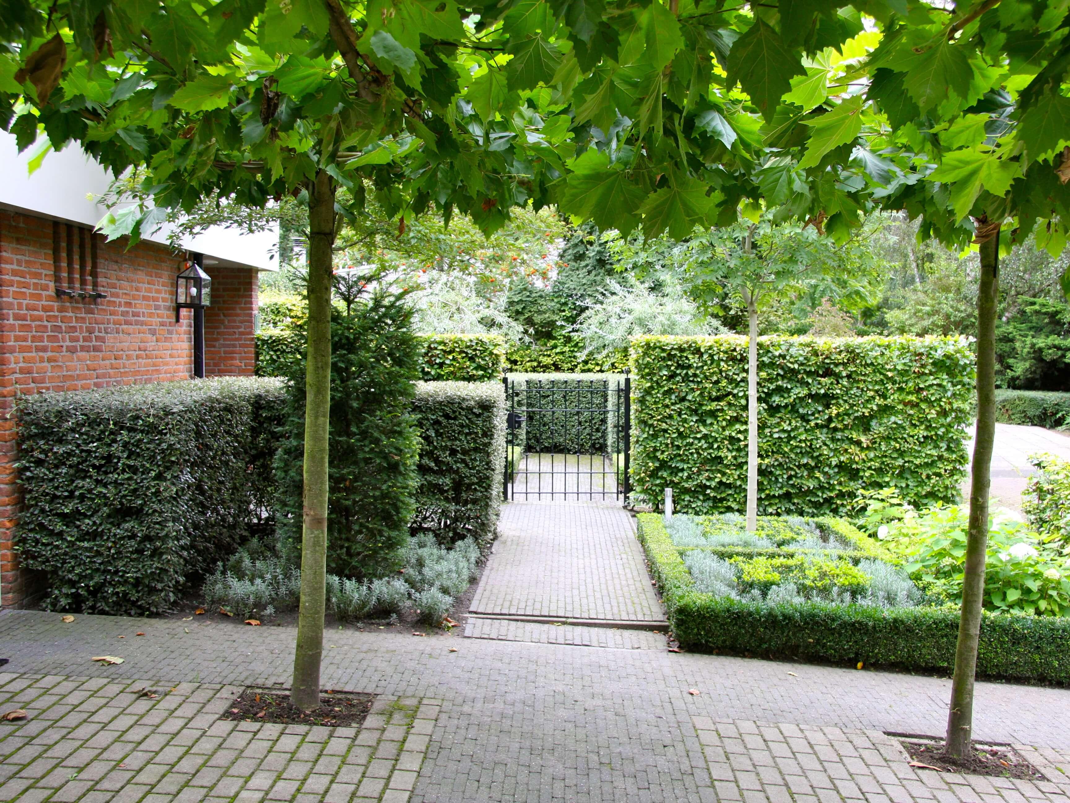 Tuin Hagen Soorten : Soorten hagen tuintuin