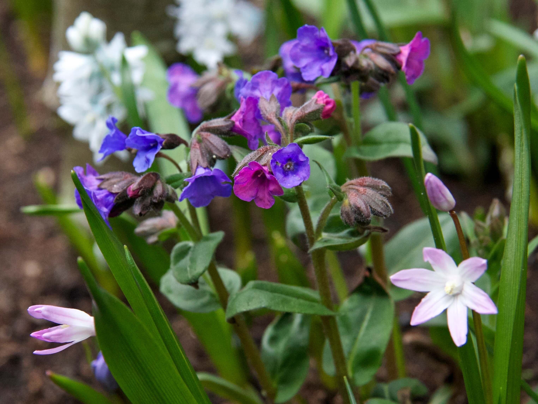 vaste planten en bloembollen