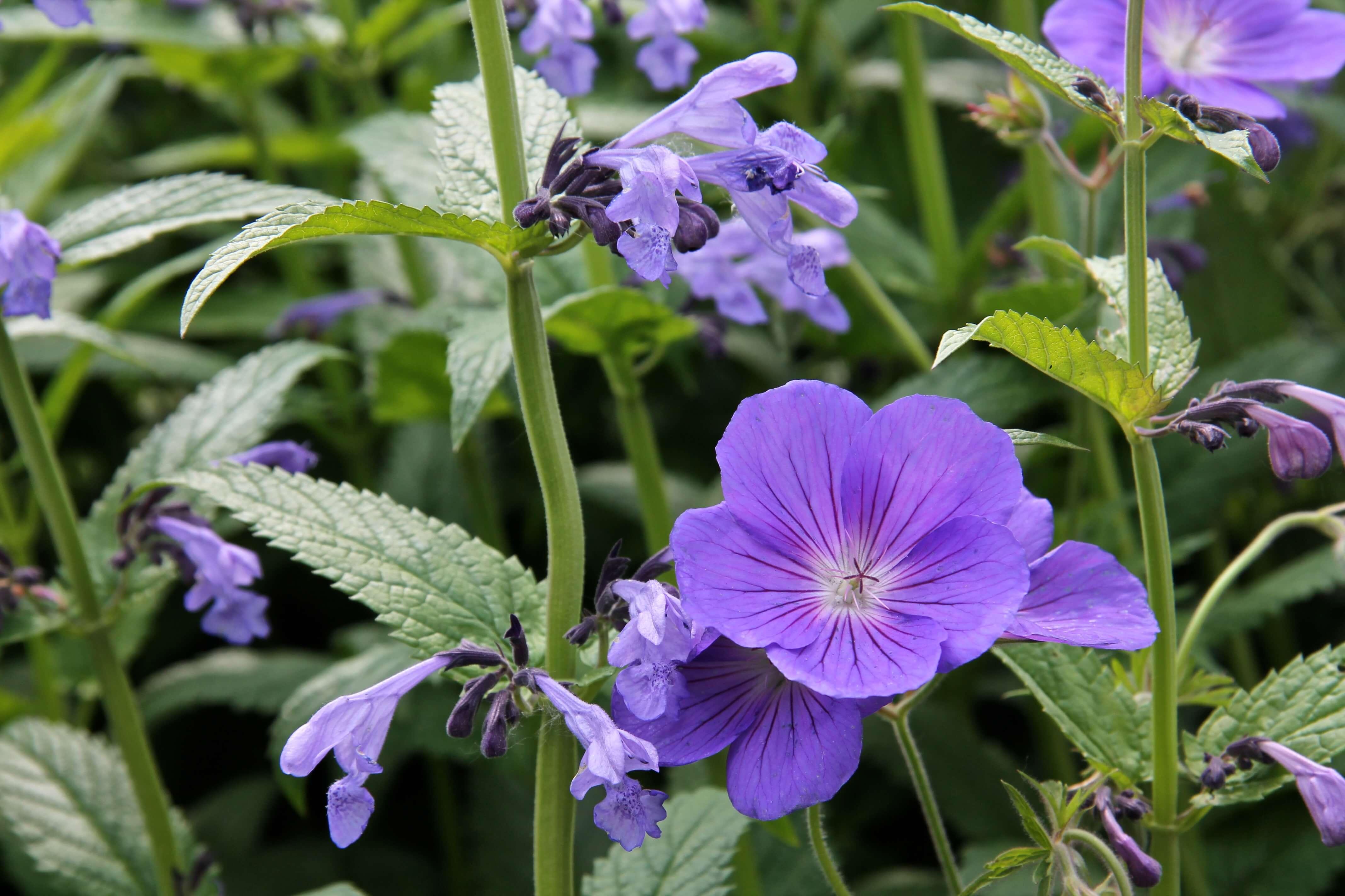 vaste planten gebruiken in je tuin