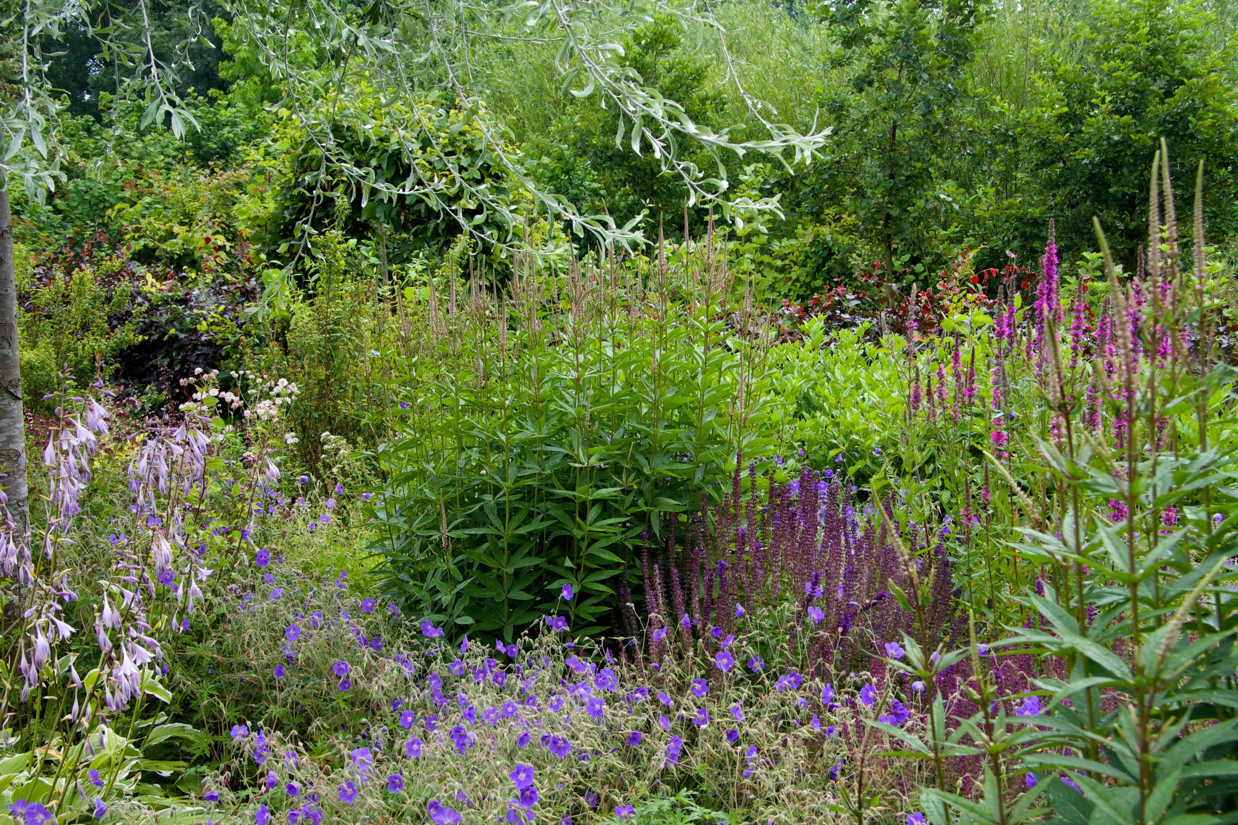 plantenborder in de levende tuin