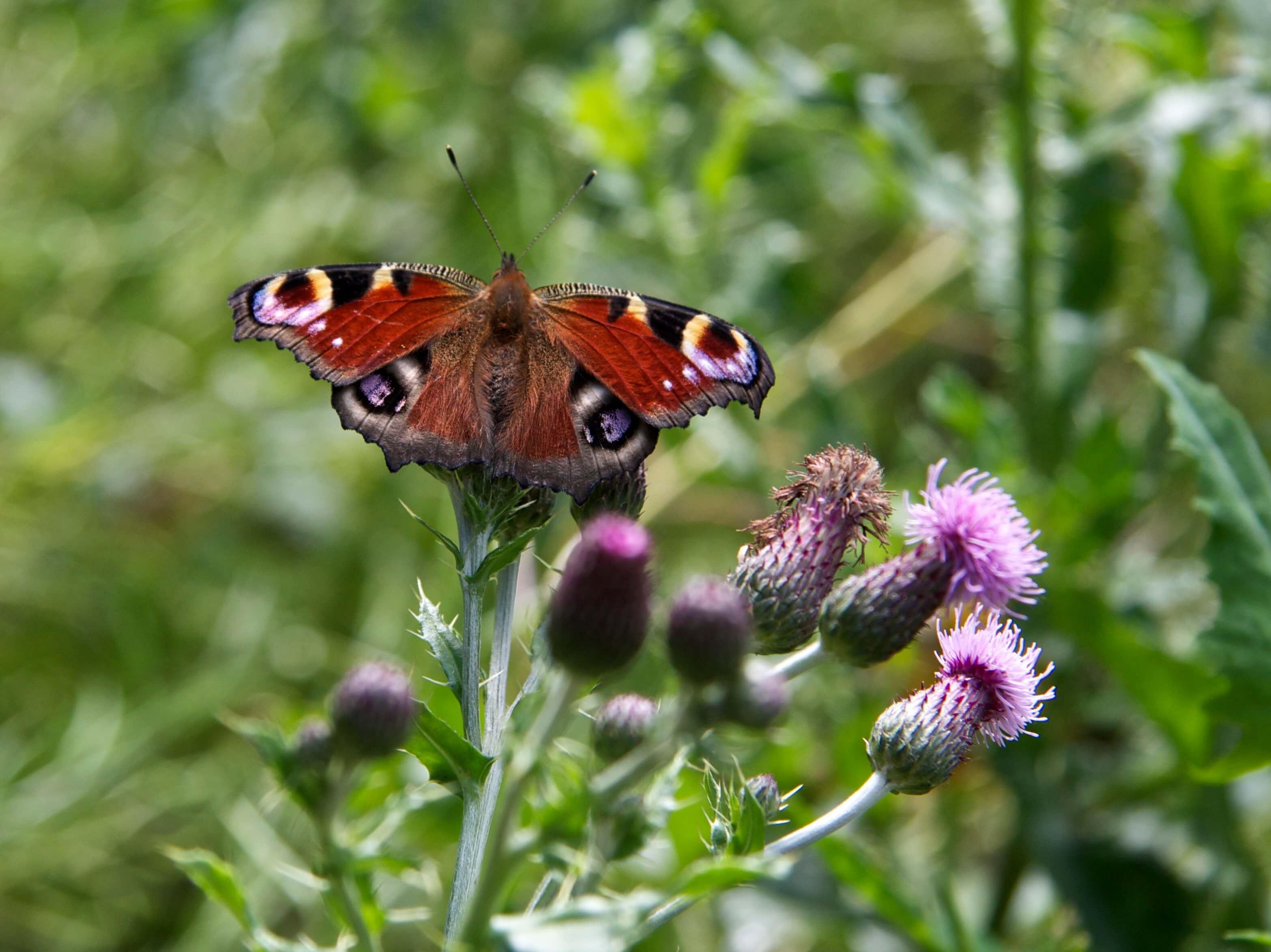 Foto uit het tuinboek 'Plantwijzer'