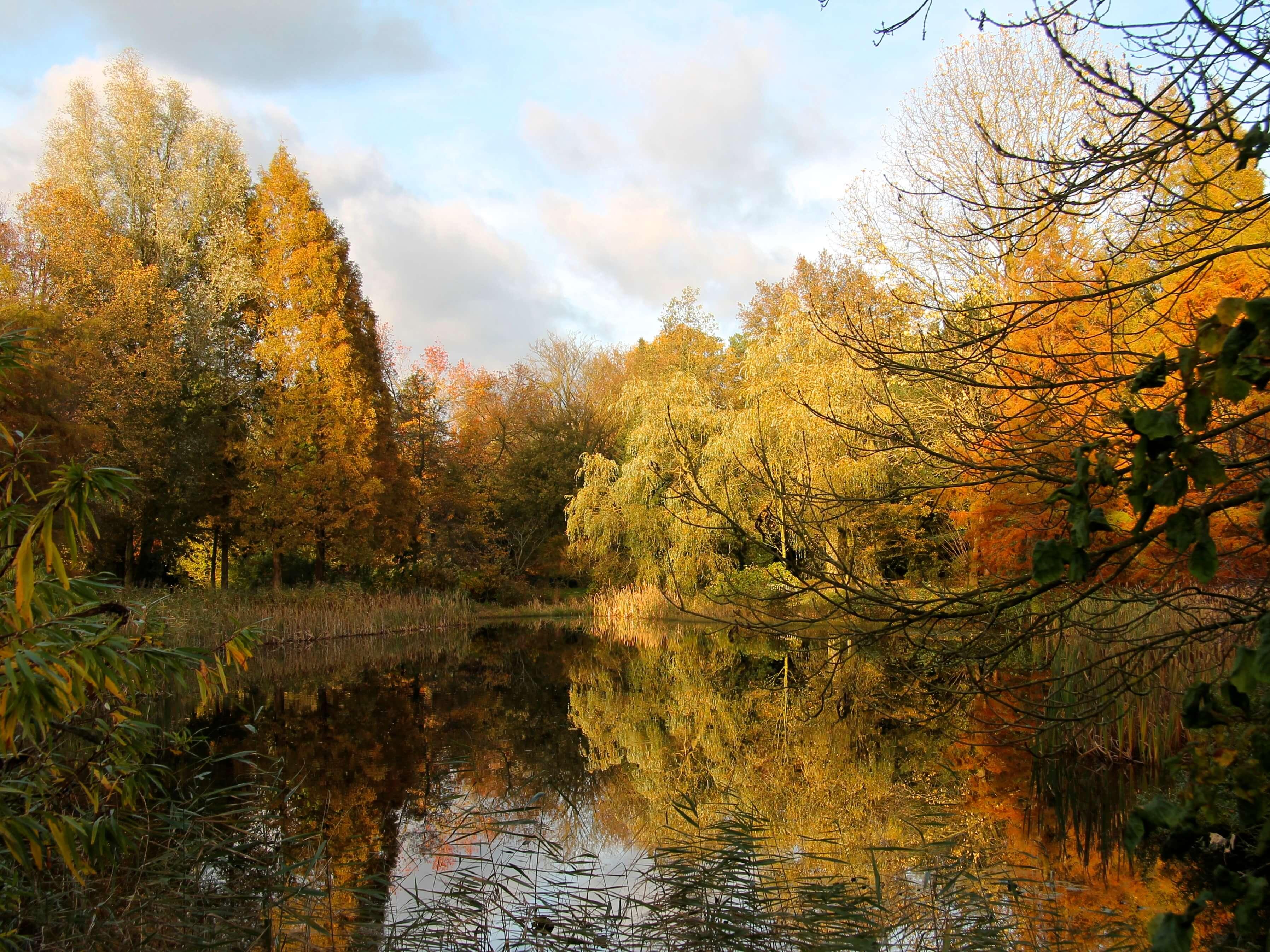 vijver met herfstkleuren